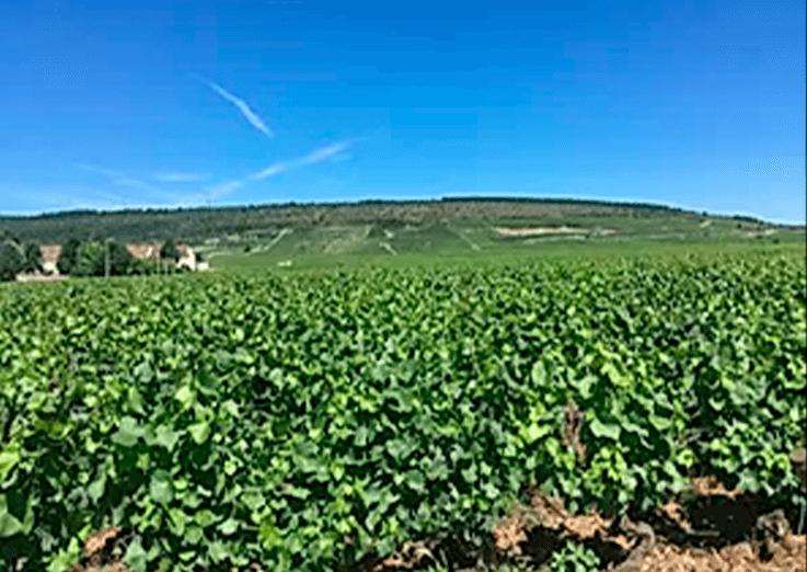 Qual a melhor época pra visitar a Borgonha?