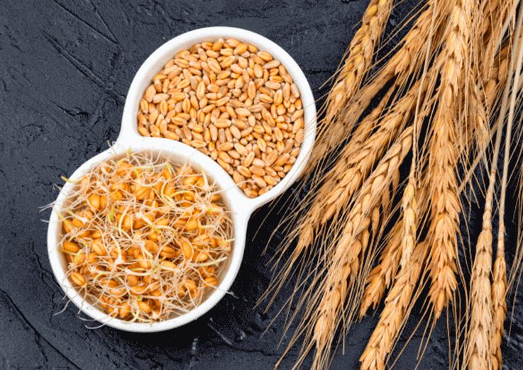 Como fazer alimentos germinados em casa