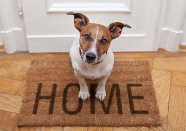 Segurança do seu pet no dia a dia